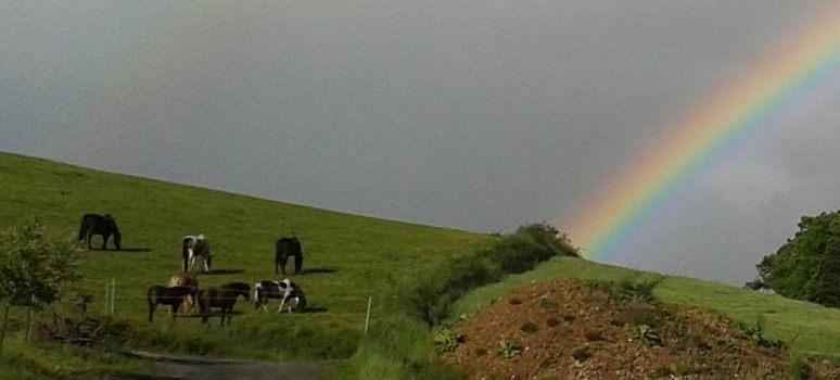 Regenbogen am Nachmittag...