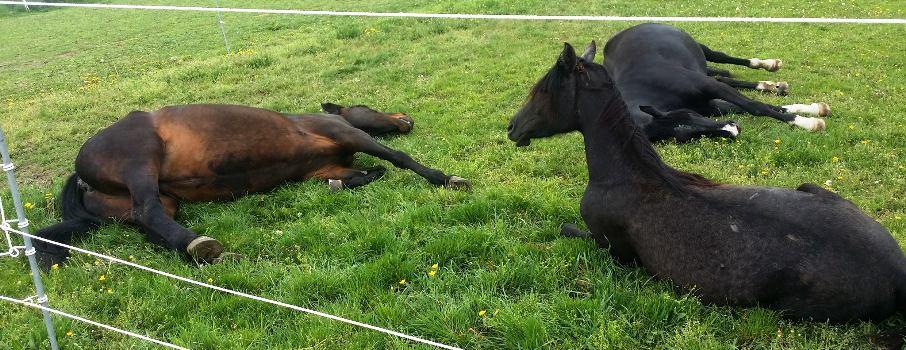 Auch Pferde schlafen ....